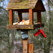 Bird feeder with bread — Stock Photo