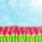 Campo del tulipán — Foto de Stock