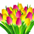 Tulips bouquet — Stock Photo #23588811
