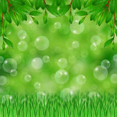Grass,green leaves and soap bubbles — Stock Photo