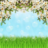 Grass,soap bubbles and bloom branches — Stock Photo