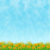 Dandelions in the grass — Stock Photo