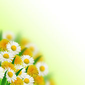 Bouquet of dandelions and daisies — Stock Photo