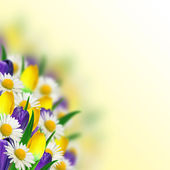 Kytice sedmikrásky, šafrán a tulipány — Stock fotografie