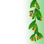 Větev s dovolenou a oranžové květy — Stock fotografie