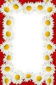 Daisies and red ribbon frame — Stock Photo