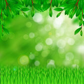 Green leaves and grass — Stock Photo