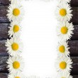 Frame: daisies on the wooden background — Stock Photo