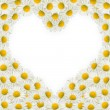 Heart frame of daisies — Stock Photo