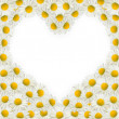 Stock Photo: Heart frame of daisies