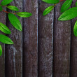 Green leaves on the wooden planks texture — Stock Photo #25617973