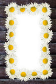 Frame: daisies on the wooden background — Foto Stock