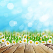Daisies field and wooden road on the sky background — Stock Photo