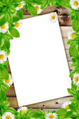 Frame: daisies on the wooden background and white paper — Stock Photo