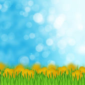 Field of yellow flowers and grass on the sky background — Stock Photo