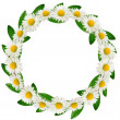 Circle frame of daisies and green leaves — Stock Photo