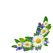 Bouquet of daisies, blue flowers and leaves — Stock Photo