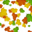 Maple leaves defoliation — Stock Photo