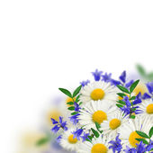 Boququet of wild flowers — Stock Photo