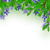 Green leaves and blue flowers — Stock Photo