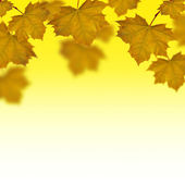Fall of yellow maple leaves — Stock Photo