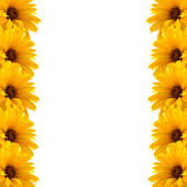Frame of yellow flowers — Stock Photo