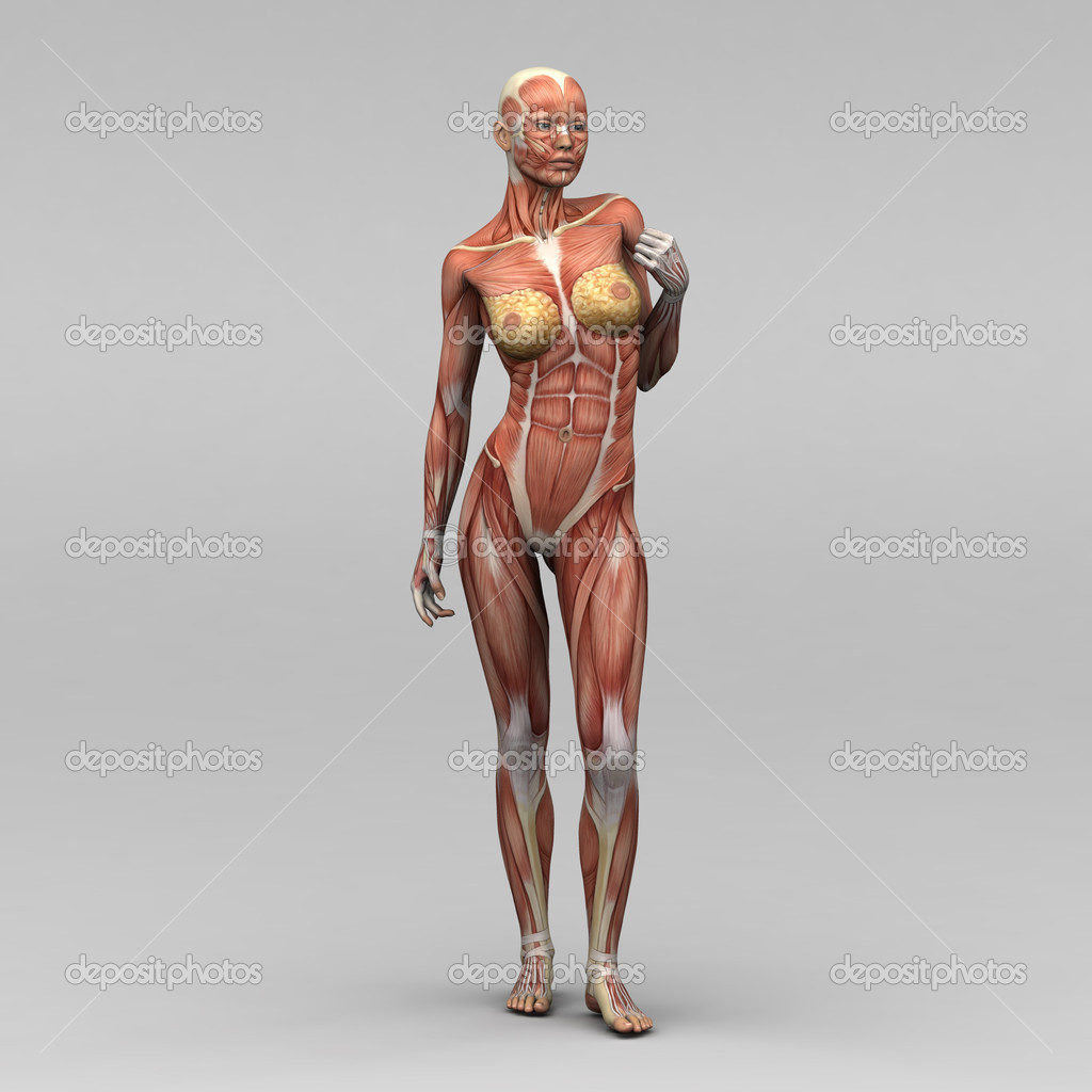 Woman Anatomy Hd Wallpapers Plus