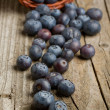 Fresh blueberries — Stock Photo #20004517