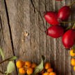 Autumn berries - Stock Photo