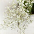 Stock Photo: Bunch of Gypsophil(Baby's-breath)