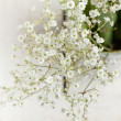 Bunch of Gypsophila (Baby's-breath) - Stock Photo