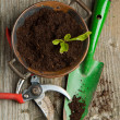 Sprout in soil with garden tools — Stock Photo #20037069