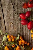 Jagody jesienią — Zdjęcie stockowe