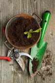 Sprout in soil with garden tools — Stock Photo