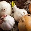 Garlics and onions — Stock Photo