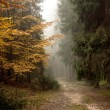 Mist in the forest - 