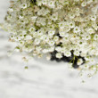 Bunch of Gypsophil(Baby's-breath) — Stock Photo #20046281