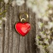 Heart and flowers — Stock Photo