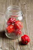 Red chili habanero peppers — Stock Photo