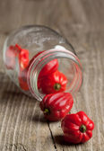 Red chili habanero peppers from jar — Stock Photo