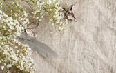 Background with bunch of Gypsophila (Baby's-breath) — Stock Photo