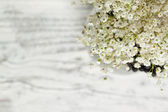 Bunch of Gypsophila (Baby's-breath) — Stock Photo