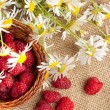 Fresh ripe raspberries and camomile flowers — 图库照片