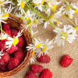 Fresh ripe raspberries and camomile flowers — Stok fotoğraf