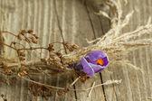фиолетовые крокусы цветок в сухой венок — Стоковое фото