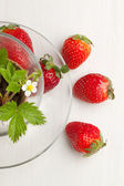 Sprout of strawberry and fresh strawberries — Stock Photo