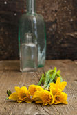 Bunch of yellow daffodil in vase — Stock Photo