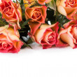 Orange roses over white — Stock Photo