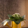 Flowers in watering can — Stock Photo #20097067