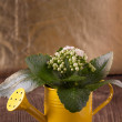 Flowers in watering can — Stock Photo #20097403